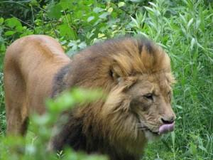 Ein Paradies für wilde Tiere - das ist der Zoom ganz sicher