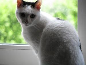 Katzen wehren sich selbst gegen zudringliche Kater - null Problemo