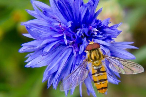 Biene + Blume