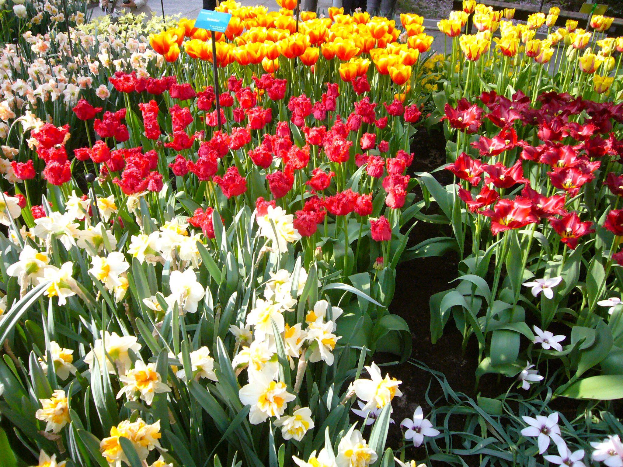 Die richtige Beratung für den heimischen Garten gibt es im Gartencenter Benning in Bochum, weiß Detlef Schumann