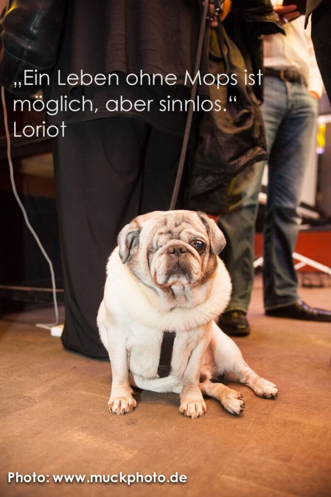 Mops_Loriot_BarSession