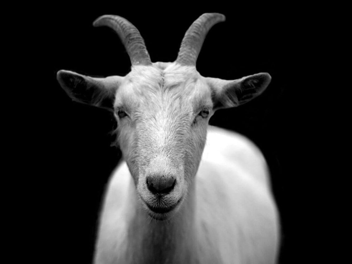 Juchuch! 2015 ist im chinesischen Horoskop das Jahr der Ziege