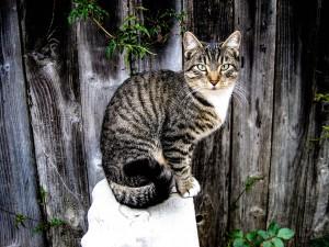 Was für eine perfekte Katze nicht wahr? von rock78