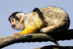 Gerechte Preise: Oder warum Affen rationaler handeln als Menschen