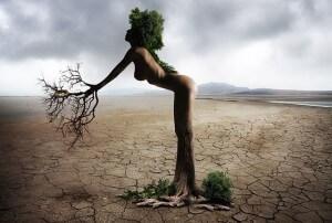 Weiblicher_Baum
