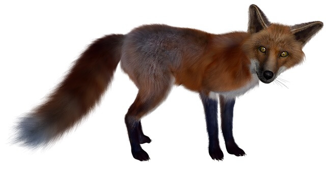 Wie ein Fuchs auf dünnem Eis beobachtet der Unternehmer, was über das Unternehmen gesprochen wird im Web