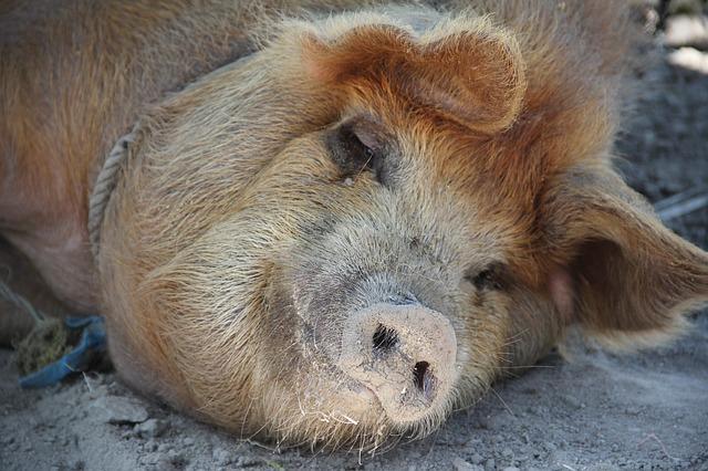 """Vom """"inneren Schweinehund"""" – und warum er für unsere Ziele so wichtig ist"""