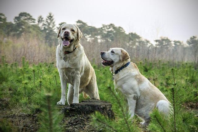 Sind Menschen konditionierbar wie Pawlowsche Hunde?