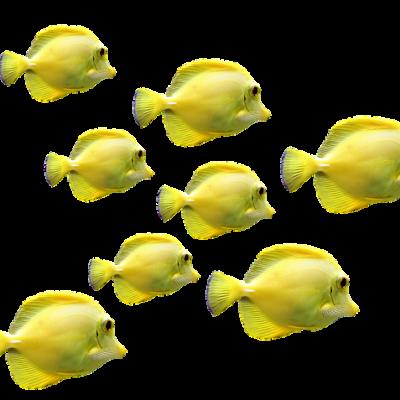 https://pixabay.com/de/fische-fischschwarm-unterwasserwelt-2817329/