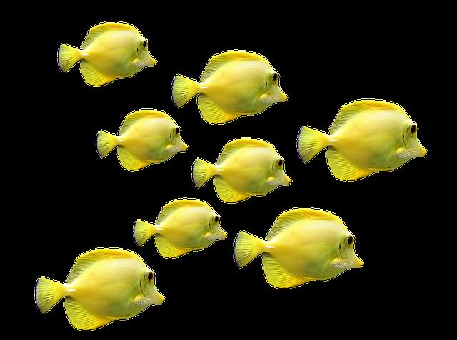Forschungserfolg: Roboter-Fisch wird von Zebrafischschwarm akzeptiert