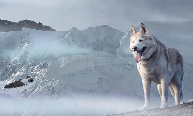 """2018 wird das Jahr des """"Erde-Hunds"""" – was das chinesische Horoskop dazu sagt…"""