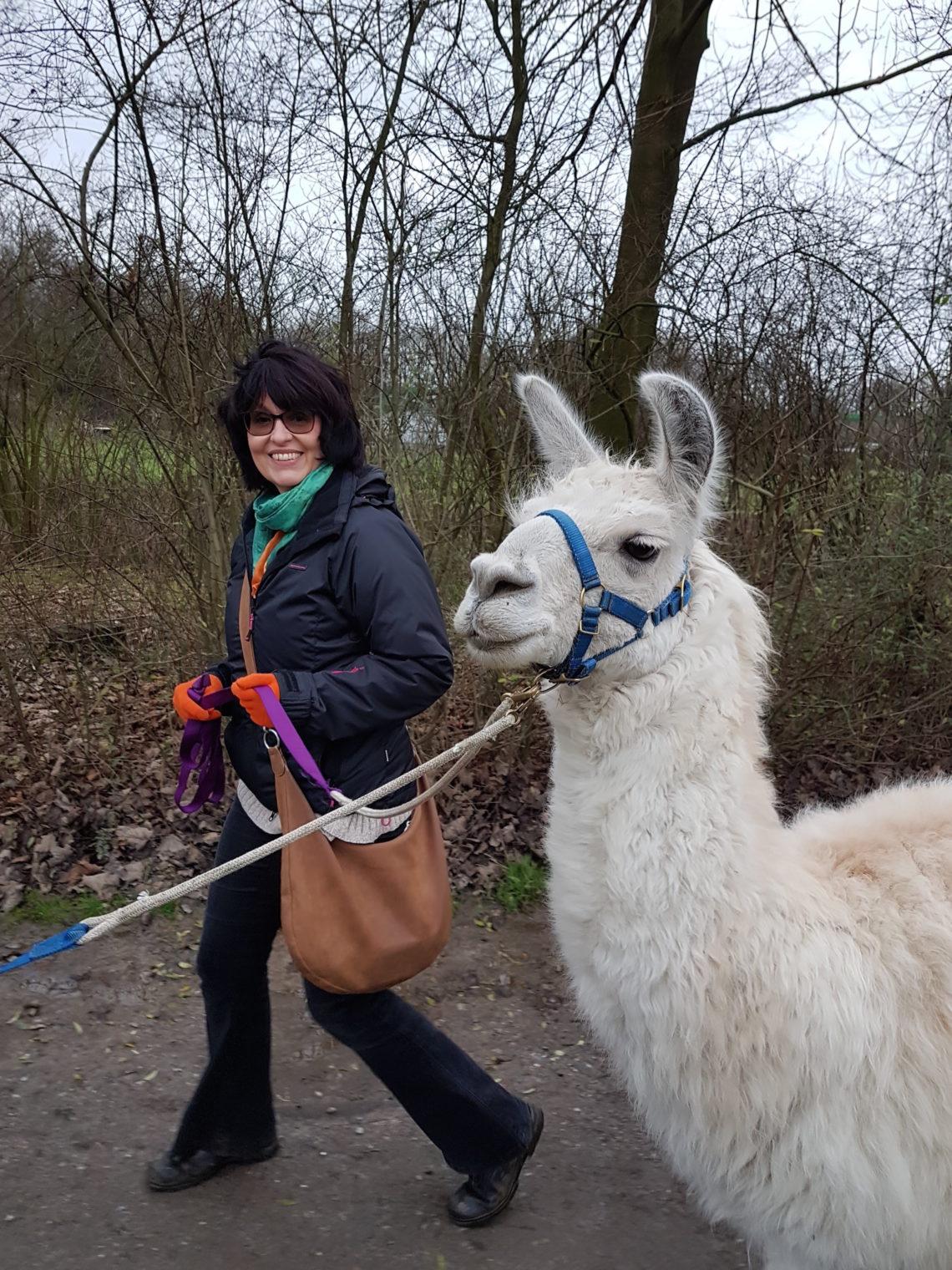 Lamas führen und Herzen sprechen lassen – in Gelsenkirchen bei den Prachtlamas