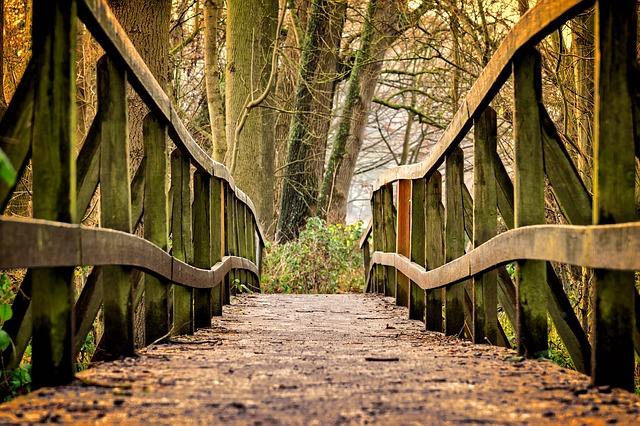 https://pixabay.com/de/weg-br%C3%BCcke-steg-holz-natur-3024773/