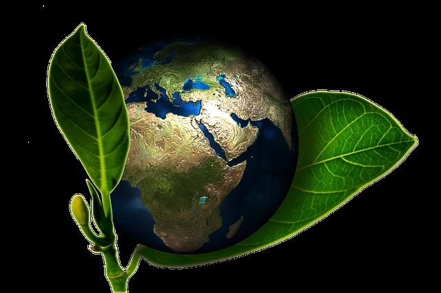 Die Umwelt schonen mit Green IT
