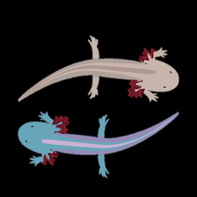 Von Ethik, Gewissen und meinem Axolotl-Tierchen