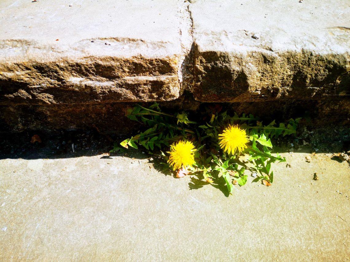 Resilienz (psychische Widerstandskraft): Die Corona-Krise und wir
